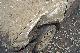 OMA 軽自動車 ダート 2時間+2時間 耐久 レース 走行 レンタル MotorSports オートランド千葉 豪雨 スコール 重馬場 雨上がり 接触 Rental Race Dart モータースポーツ オーマ JAF公認クラブ club チーム Team